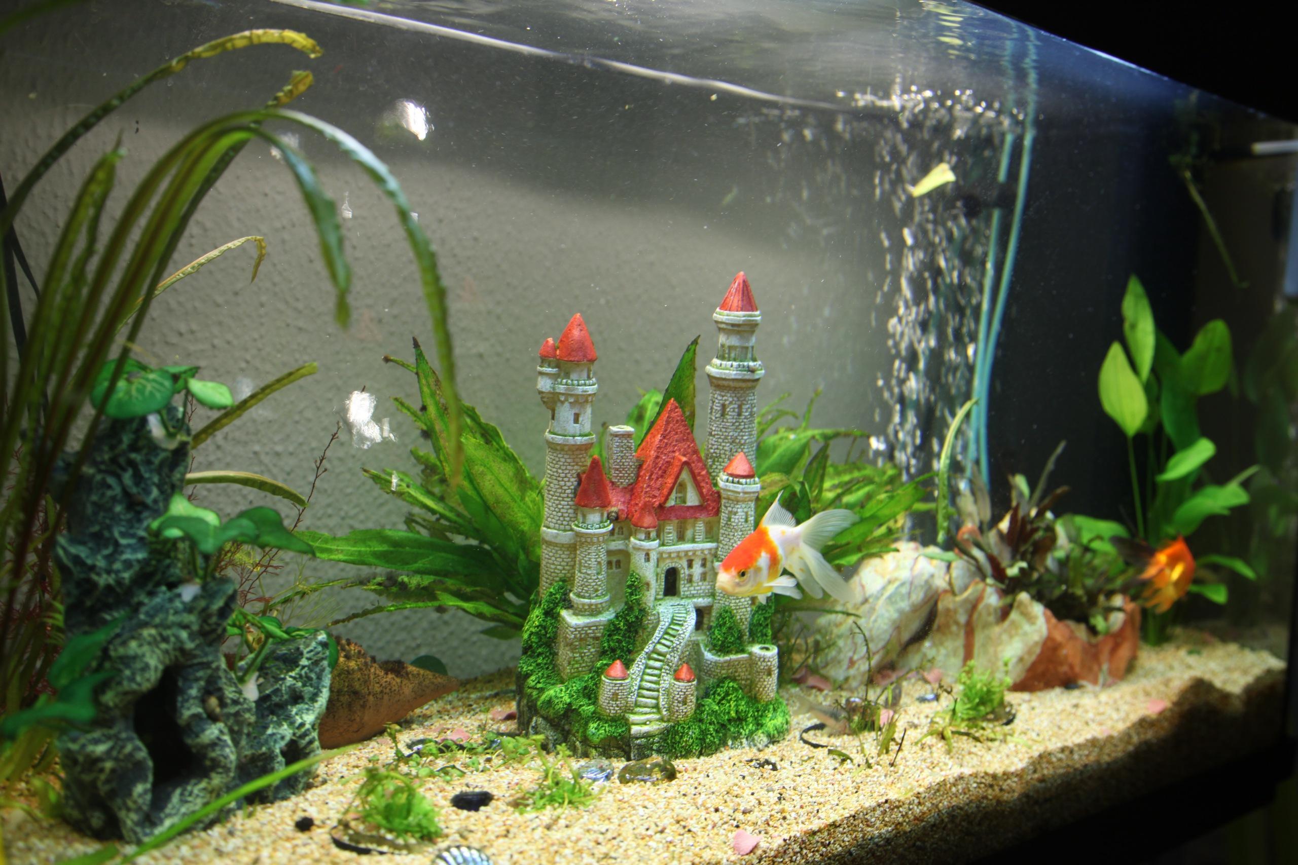 Оптимальный объем аквариума для детской комнаты варьируется от 20 до 80 л.