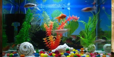 Большой аквариум в детской комнате